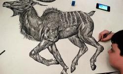 Dessins d'animaux de Dusan Krtolica