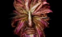 Portraits fruits et légumes de Klaus Enrique